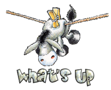 What's up - DunkeyOnline