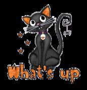 What's up - HalloweenKittySitting