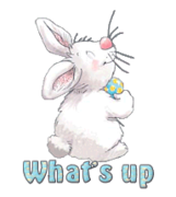 What's up - HippityHoppityBunny