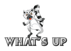 What's up - RaccoonStepOnName