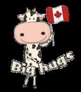 Big hugs - CanadaDayCow