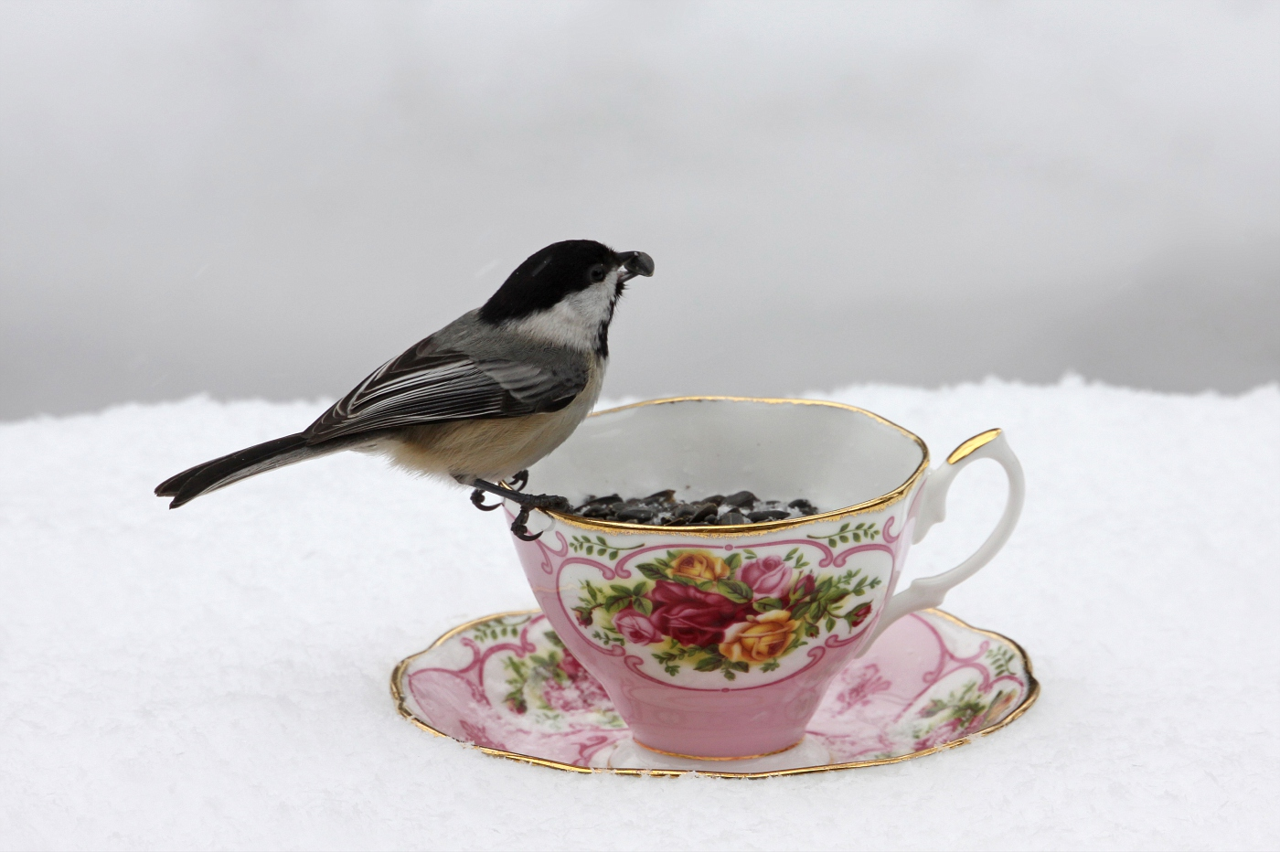 Teacup at the Feeder #3