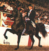 ARIZTOTLE #178838 (*Bask++ x Aethena, by The Real McCoy) 1978 black stallion bred by Lasma Arabian Stud