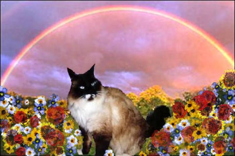unka at rainbow