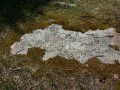 DSCN6770    moss in nature reserve in Essex