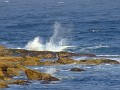 Maroubra Rocks 002