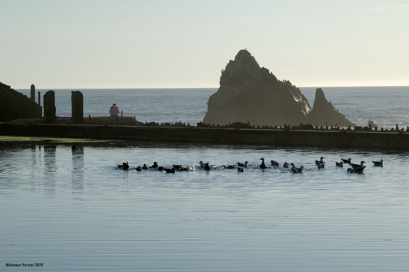 Ruins of Sutro Baths