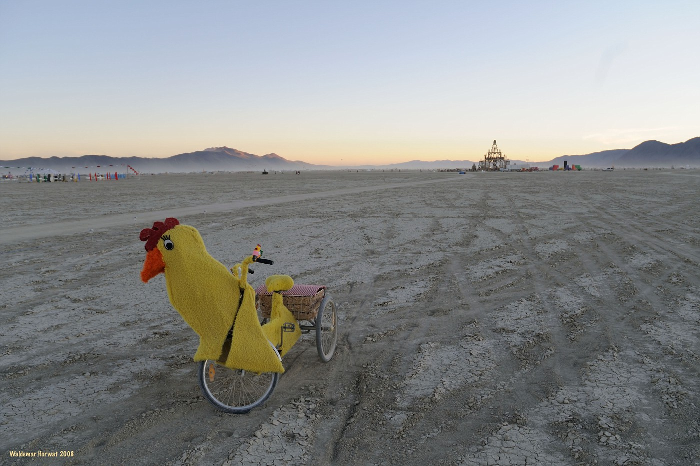 Traveling Cock