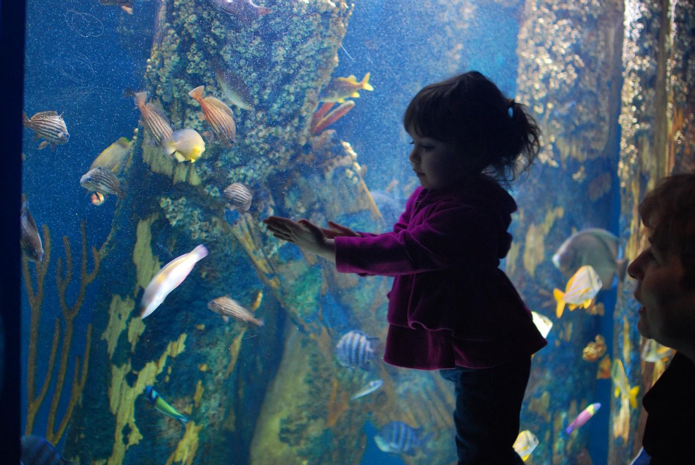 The Aquarium 016