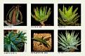 1 Aloe (6)