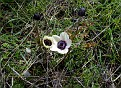 Anemone (8)