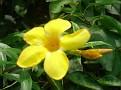 Splendid flower from my sister's garden