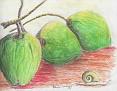 3 cocos et l' escargot.