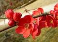 Bloom in the rear garden