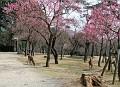 Nara park near Sagi Pond