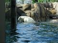 2007 Toledo Zoo 009