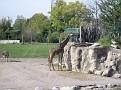 2007 Toledo Zoo 019