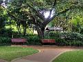 Brisbane Botanic Gardens 012