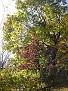 Trees 099
