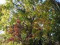 Trees 100
