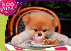 Boo The World's Cutest Dog #21 (1)