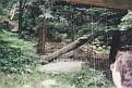 1995 Bronx Zoo 21