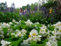 gardens 064