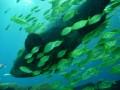 ga-aquarium 025
