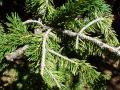 18 Tree Close Up