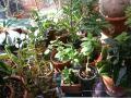 Greenhouse (16)