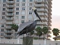 Pelican in the Waterway of Ft. Lauderdale, Florida.