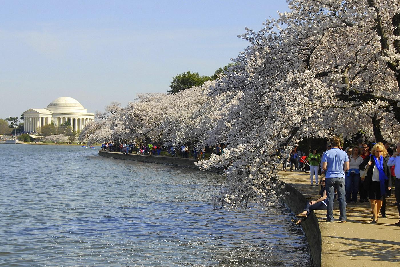 Cherry Blossom Fest 2014 106