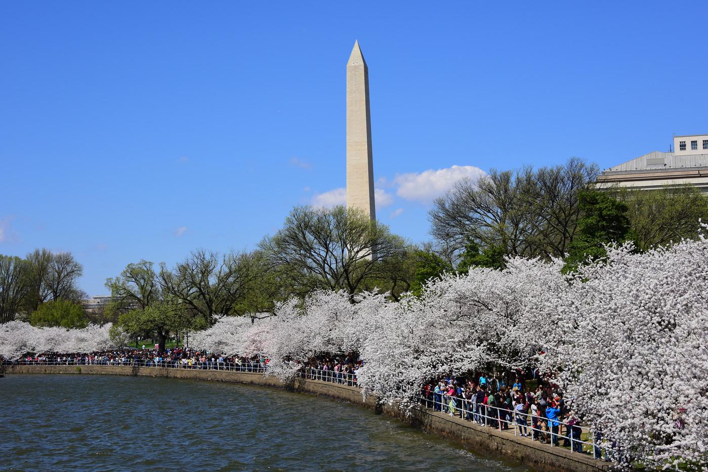 CherryBlossomFest APR2015 459