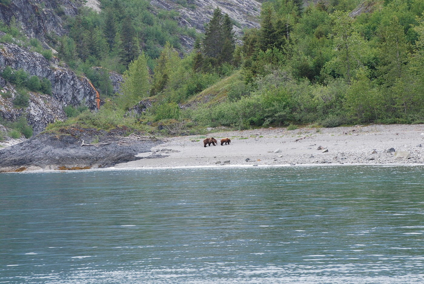 Brown bear on the beach in Glacier Bay