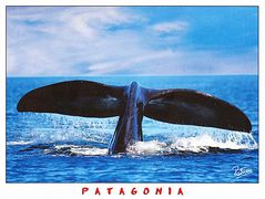 Argentina - SOUTHERN RIGHT WHALE NA