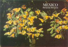 Mexico - MONARCH BUTTERFLY NA