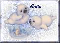 Baby Seals1Anita