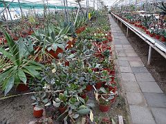 1 Adromischus Collection