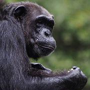 Singapore Zoo Parks 09