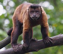 Singapore Zoo Parks 17