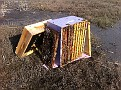 Setting out the trashed out deep and frames for drying and robbing.  There were still frames with good sections of honey.