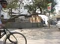 Streets of Delhi, India...