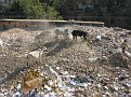 Kids and Cows routing for garbage in the dump on the other side of the wall next to the Palace!!!