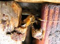 Working Bees Inside the Hive...