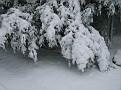 Snow Storm of December 19 2009 (108)