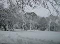 Snowstorm 2-6-2010 (1)