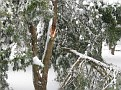 Snowstorm 2-6-2010 (73)