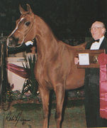 G MENATIN #461944 (Menes x Amber Satin, by *Muscat) 1990 chestnut mare