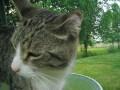 Table Kat