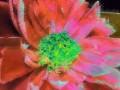 Flower Service 062c